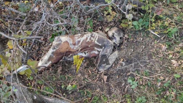 скелетований труп людини під Дніпром